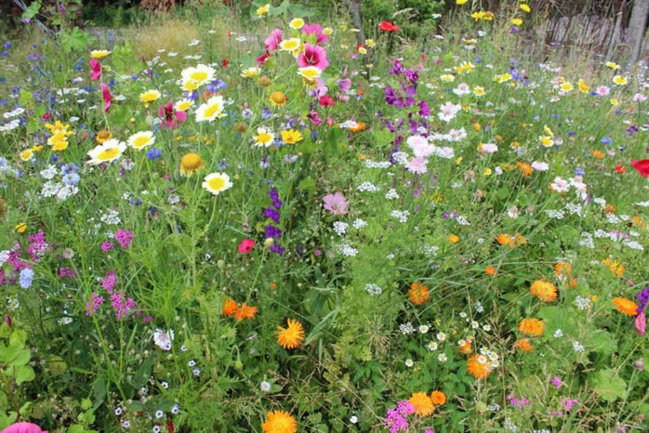Blumenwiese, naturnaher Garten, Foto: Goldbany / fotolia.com