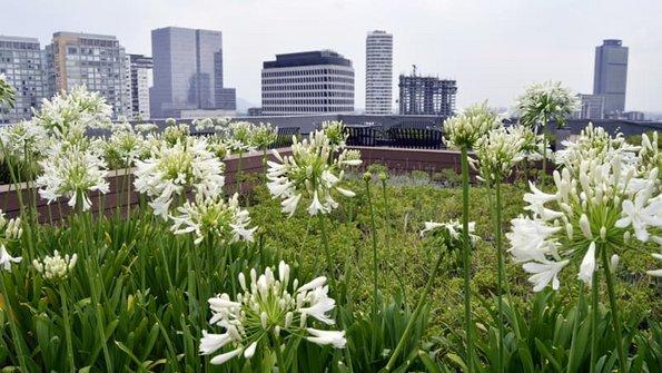Flachdach, Blumen in Nahaufnahme, im Hintergrund eine Skyline, Foto: Alejandro / stock.adobe.com
