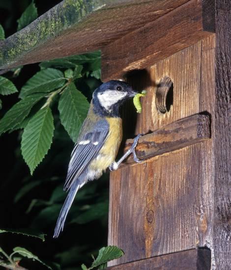 Nistkasten für Vögel, Naturgarten, Foto: Omika / fotolia.com