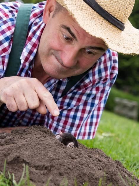 Maulwurf vertreiben, Maulwurf bekämpfen, Maulwurf im Garten, Foto: juefraphoto / fotolia.com