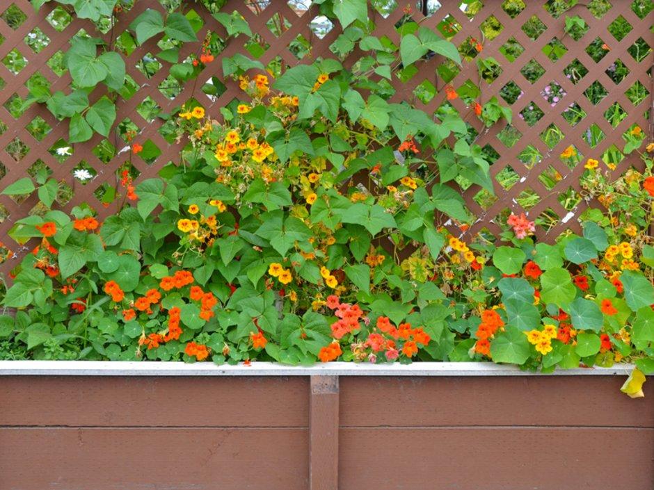 Sichtschutz, Pflanzkübel mit Brunnenkresse, Foto: perlphoto / stock.adobe.com