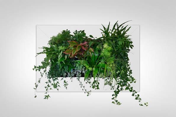 Gr ne wand raffinierter blickfang f r die wohnung for Zimmerpflanzen dekorativ