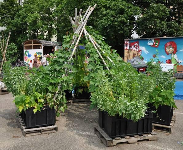 Urban Gardening, Bohnen-Tipi, Nürnberg, stadtgarten. Foto: stadtgarten-nuernberg.de