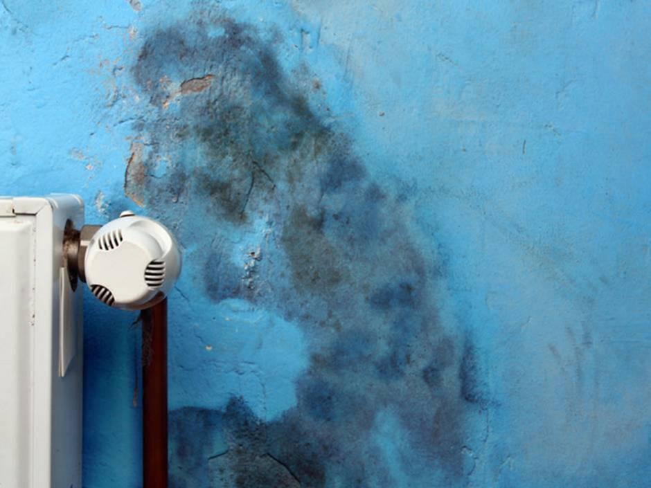 Schimmelbekämpfung, Blaue Wand mit Schimmelflecken, Foto: adam88xx / fotolia.de