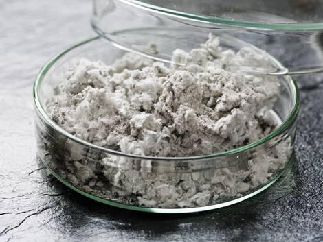 Asbestsanierung, Asbestmaterialprobe in einer Petrischale, Foto: Tyuboya / stock.adobe.com