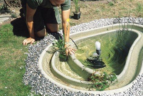 Teich selber bauen, Gartenteich anlegen, Pflanzen, Foto: OASE GmbH