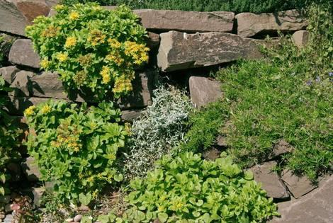 Trockenmauer, naturnaher Garten, Foto: Miket / fotolia.com
