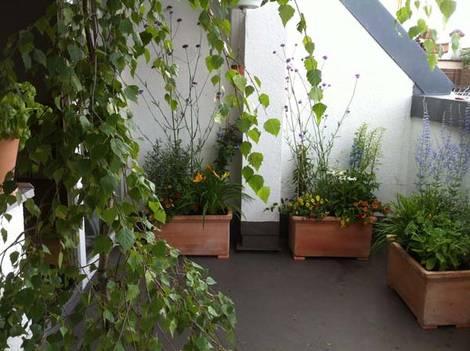 Kleiner Balkon, Birken, Terrakotta-Pflanzenkübel, Foto: balkonsaison.de
