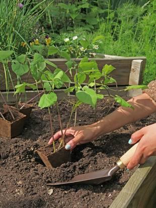 Hochbeet selber bauen, diy, Pflanzen, Obst, Gemüse, Kräuter, Foto: tsach - Fotolia.com