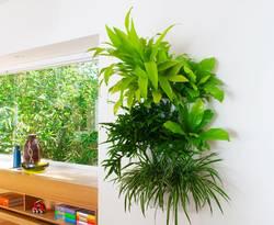 farn, wohnzimmer, gruene wand, greenbop.de