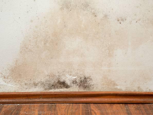 Bautrocknung, nasse Wand mit Schimmel, Foto: urbans78 / stock.adobe.com