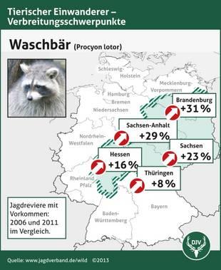 Waschbär, Verbreitung, Deutschland, Quelle: jagdverband.de