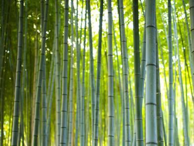 Naturtapeten, Bambus, Foto: Travel Wild / stock.adobe.com