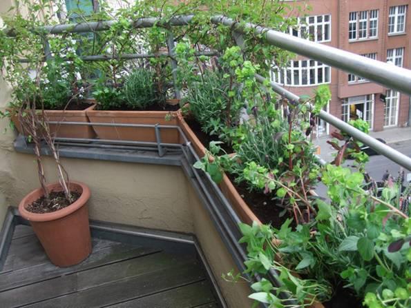 kleiner Balkon, nachher, Sträucher, Kräuter, Sichtschutz, Foto: balkonsaison.de