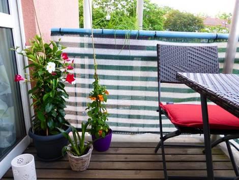 kleiner Balkon, Sichtschutz, Dipladenia, Schwarzäugige Susanne, Foto: Katharina Richterstetter