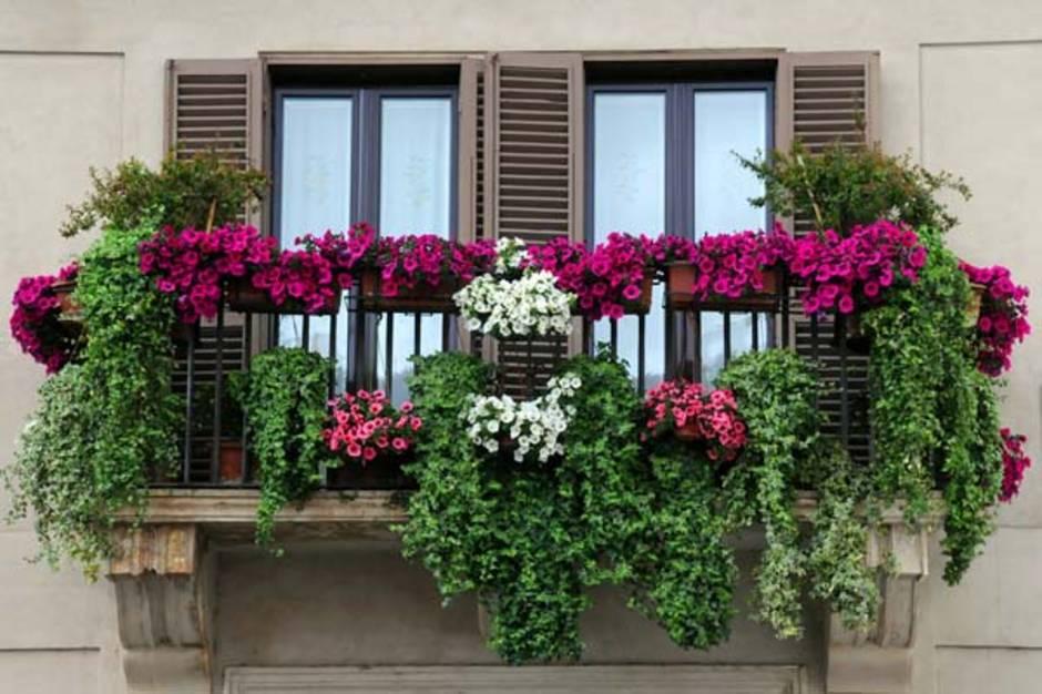 kleiner Balkon, französischer Balkon, Bepflanzung, Foto: vicspacewalker/fotolia.com