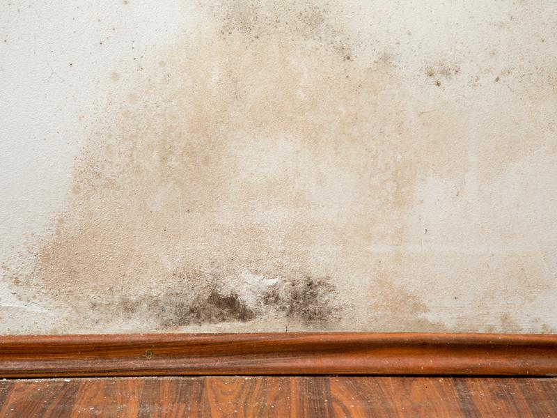 Super Bautrocknung: Feuchte Wände trocken legen - bauen.de QZ27