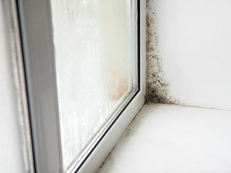 dem pilz keine chance schimmelbek mpfung im wohnraum. Black Bedroom Furniture Sets. Home Design Ideas